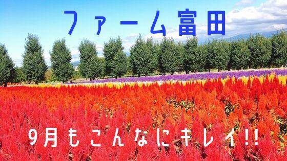 9月のファーム富田